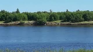 Под мостом в Сыктывкаре утонул мужчина 22 июля 2018 года