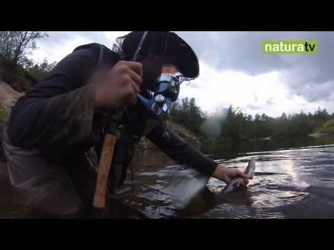Medvedev Putin che pesca