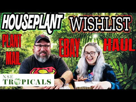 NSE Tropicals House Plant Unboxing, Ebay Wish List Plant & Plant Mail