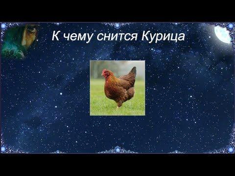 К чему снится Курица (Сонник)