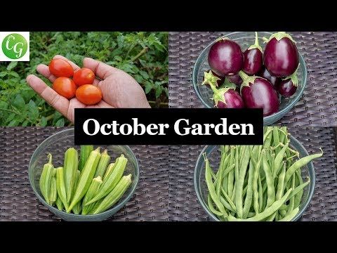 Welcome To The October California Garden - Gardening Tips, Advice & A Lot More!