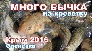 Крым ловля бычка на азовском море
