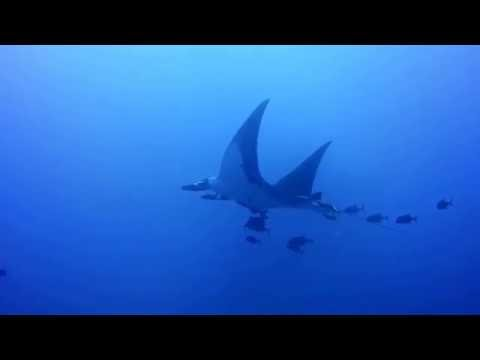 Diving Socorro Islands Mexico June 2016
