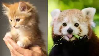 Cute baby animals Videos Compilation cute moment of the animals - Cutest Animals On Earth