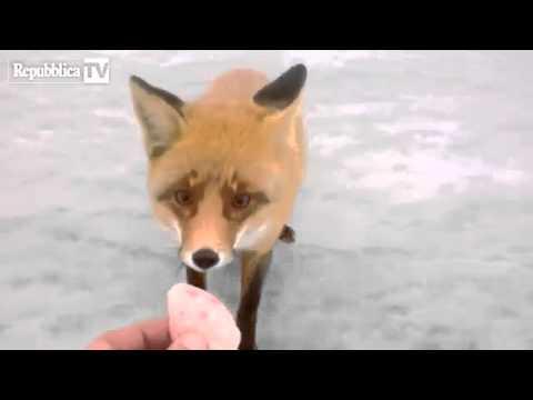 La nutrizione di metodo di video di attrezzature da pesca