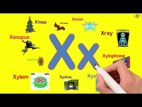 5 letter words starting with que words starting with x tomclip 16377