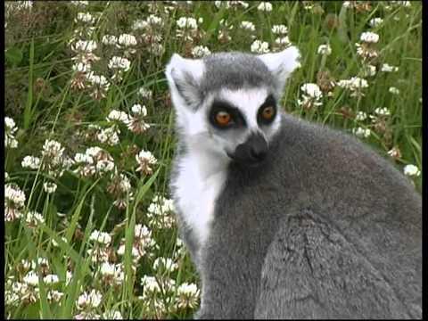 Zoo Parc Overloon Een paradijsje