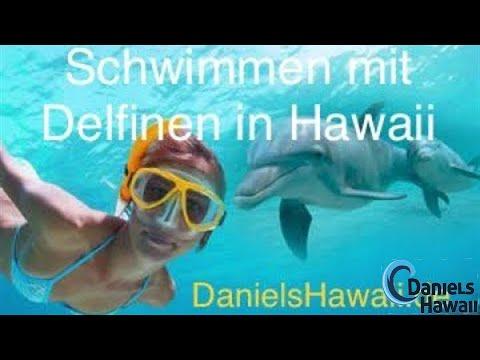 Schnorcheln in Hawaii - Tipps wo ihr Delfine & Schildkröten in Hawaii seht