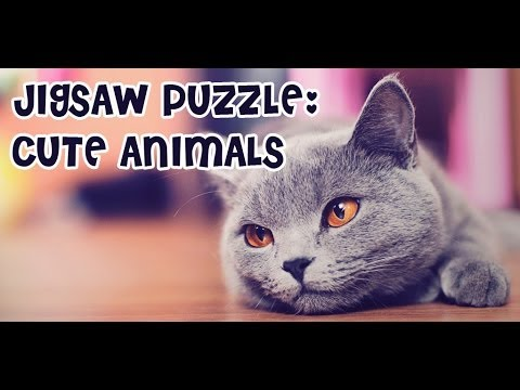 Video of Jigsaw Puzzle: Cute Animals