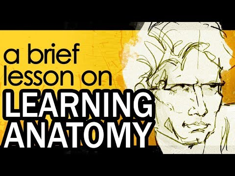 LEARNING ANATOMY - A Brief Lesson