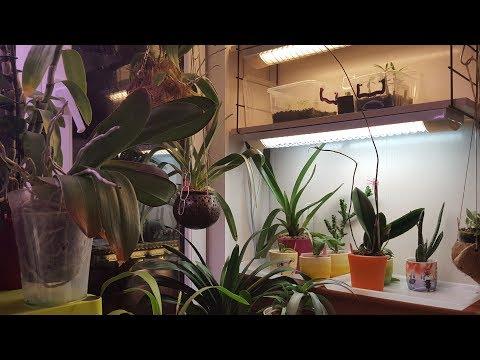 Что новенького в конце июля. Орхидеи и др.