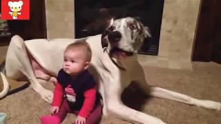 Прикольные видео про детей, играющих с домашними питомцами   смотреть одно удовольствие!