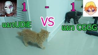 แมวUDiE VS แมวCGGG แมวใครโหดกว่า