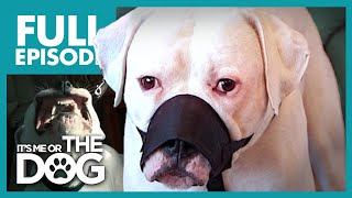 The Aggressive American Bulldog: Jed | Full Episode | It