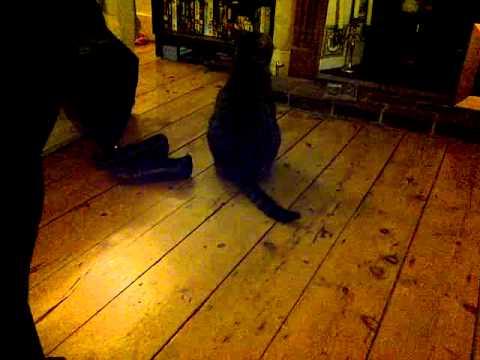 the fat cat x x x