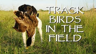 Train Your Puppy To Track Birds In The Field - Upland Bird Dog Training