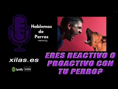 EPISODIO #46: Eres REACTIVO o proactivo con tu perro?