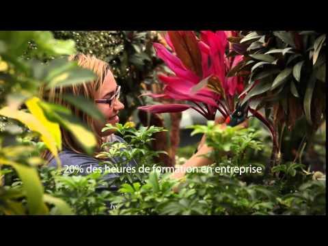 DEP | Horticulture et jardinerie