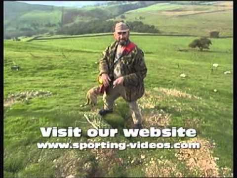 , title : 'Simon Whitehead ferreting rabbits