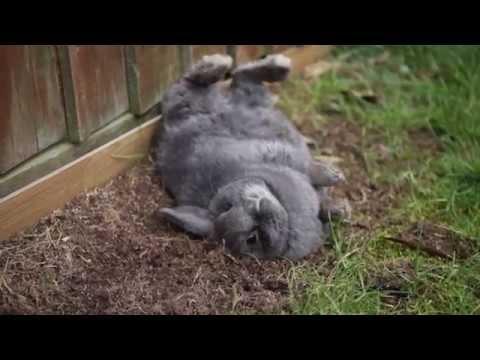 Il coniglietto che ama rotolarsi