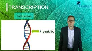 Essentials Concept Video - Protein Synthesis