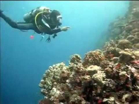 Drifttauchen Maheleg, Akassia Diving Spot  ´ Maheleg´  Drift Nord-Süd,Ägypten