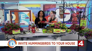 Invite Hummingbirds To Your House