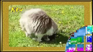 Кошачья месть Кроту Мега #Угар. 2018 😀 😁 😂