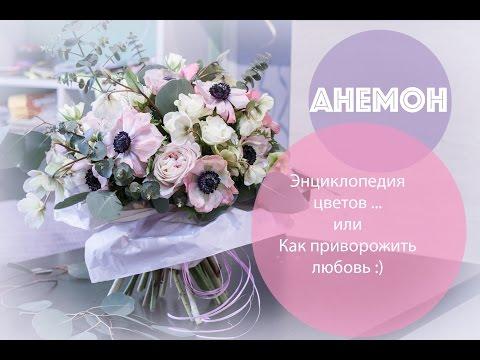 Анемоны: энциклопедия цветов ... или как приворожить парня :)