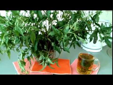 Травяные рецепты для повышения потенции