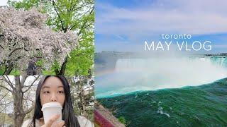 [eng] TORONTO LOCKDOWN VLOG 토론토 락다운/ 살아남으려 외출한 5월 브이로그 /when will this end? | Vlog | CHRISTINA 레몬슬러시