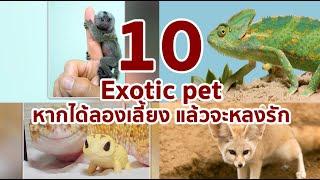 10 Exotic Pet หากได้ลองเลี้ยงแล้วจะหลงรักมัน