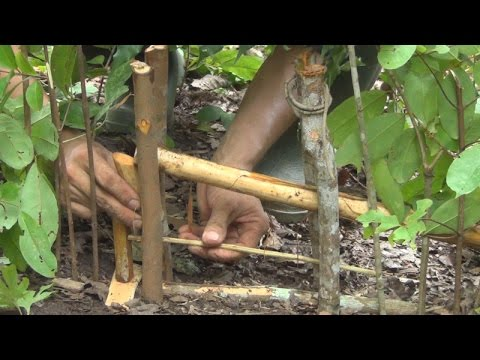 Trap'Hmong people made trap สอนทำกับดัก ( Qhia cuab ntxiab Hmoob)