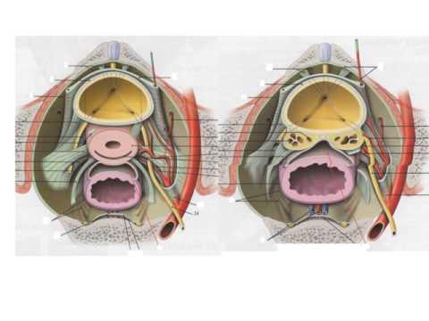 Comme gonfler les muscles pectoraux dans les conditions domestiques à lhomme sur brousyakh
