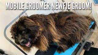 4 HOUR Newfoundland Groom In 4 Minutes! | Mobile Dog Groomer