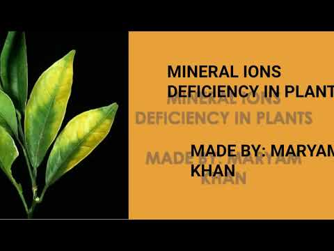 Minerals ions deficiency in Plants