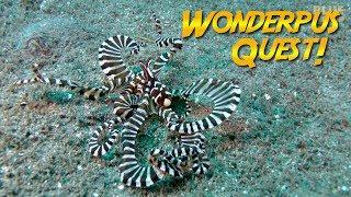 Wunderpus Octopus Quest! | JONATHAN BIRD'S BLUE WORLD