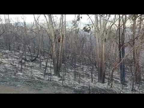 Área queimada em Barra da Estiva - janeiro de 2018 part 2