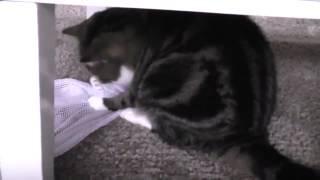 Кот протирает полы!