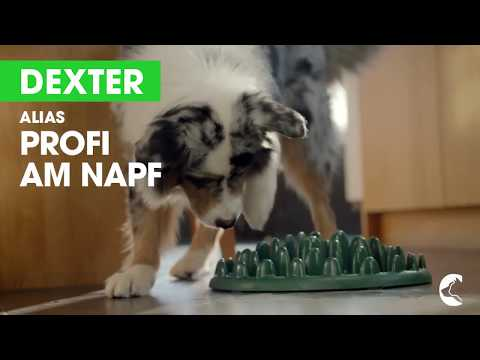 Lebensfreude füttern – Hunde- und Katzenfutter von Perfect Fit™