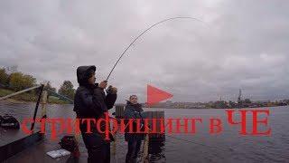 Клюет ли рыба завтра в шексне