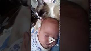 animale pisica si bebelusul