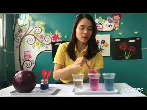 """Thí nghiệm """"Sự biến đổi màu sắc từ nước bắp cải tím"""""""