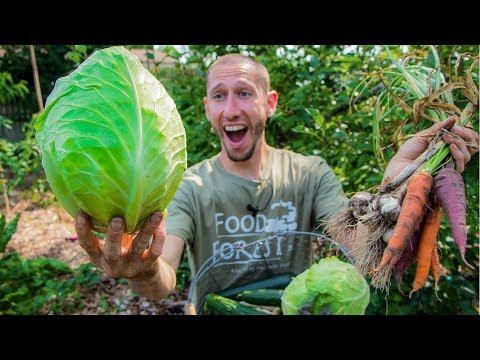 Permaculture Garden Harvest   100% Organic BACKYARD Gardening at it's Finest