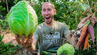 Permaculture Garden Harvest | 100% Organic BACKYARD Gardening at it's Finest