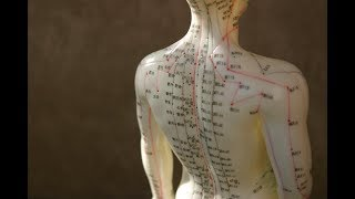 Doctor of Acupuncture and Chinese Medicine