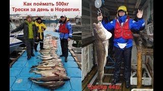 Рыбалка в Норвегии, поймали 500кг. Трески и Окуня.