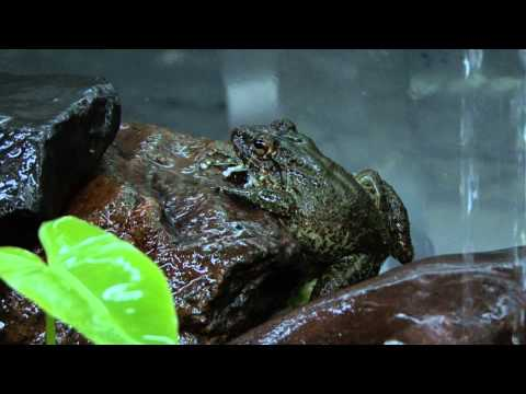 Amphibian Avenger: Smithsonian Scientist Brian Gratwicke