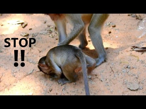 NO ... NO STOP !! Orphan Copper try escape very hard | Stop do like this on poo Copper.