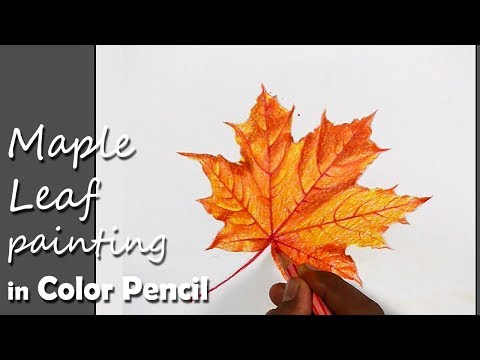 How To Paint Maple Leaf In Color Pencil Sendy Witly